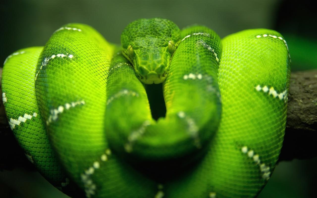 Screenshot №1 pro téma Green Python Snake 1280x800