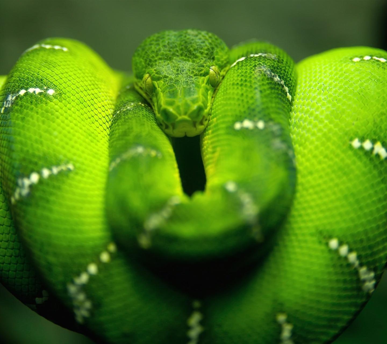 Screenshot №1 pro téma Green Python Snake 1440x1280