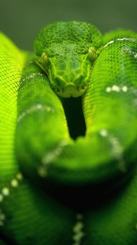 Screenshot №1 pro téma Green Python Snake 480x854