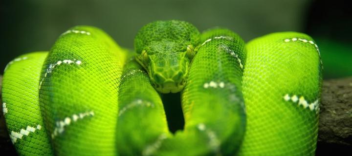 Screenshot №1 pro téma Green Python Snake 720x320