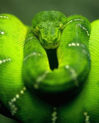 Green Python Snake - Obrázkek zdarma pro 320x480