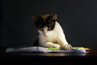 Cat Reading A Book Picture for Android, iPhone and iPad