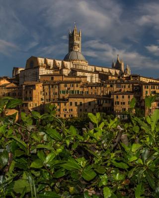 Cathedral of Siena - Obrázkek zdarma pro Nokia X1-00