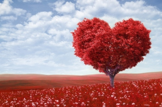 Free Love Tree Picture for Android, iPhone and iPad