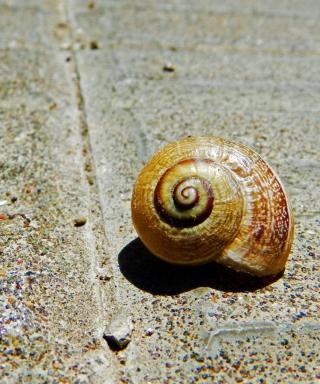 Shell - Obrázkek zdarma pro Nokia X1-00