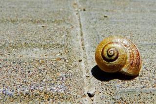 Shell - Obrázkek zdarma pro Android 1280x960