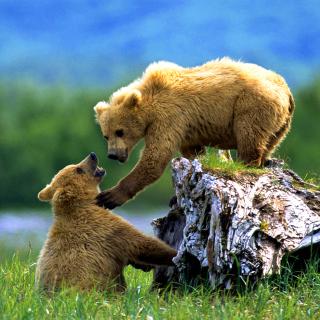 Brown Bears Games - Obrázkek zdarma pro 2048x2048