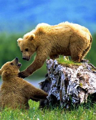 Brown Bears Games - Obrázkek zdarma pro 360x480