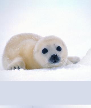 Arctic Seal - Obrázkek zdarma pro Nokia Lumia 610