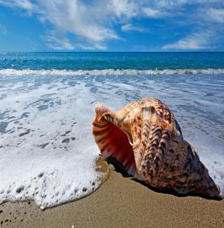 Shell And Beach - Obrázkek zdarma pro 208x208