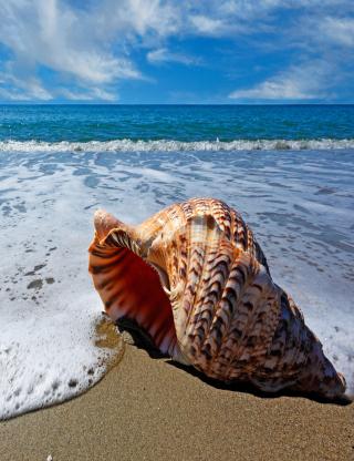 Shell And Beach - Obrázkek zdarma pro 240x432