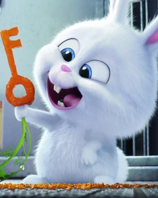 The Secret Life of Pets Bunny - Fondos de pantalla gratis para Nokia C1-01