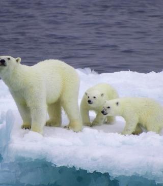 Polar Bear And Cubs On Iceberg - Obrázkek zdarma pro Nokia C1-01