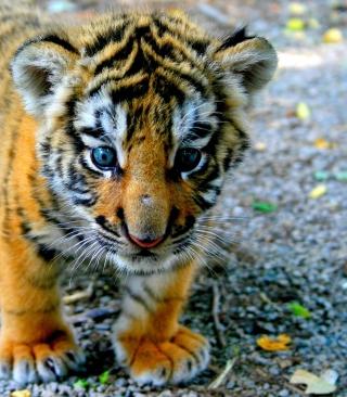 Baby Tiger - Obrázkek zdarma pro Nokia Asha 306
