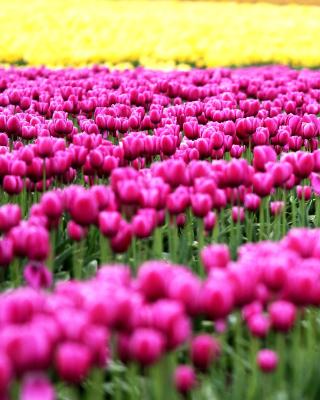 Tonami, Toyama Tulips Garden - Obrázkek zdarma pro iPhone 3G