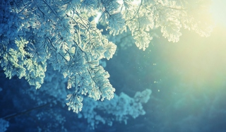 Snowy Pine Wallpaper for Android, iPhone and iPad