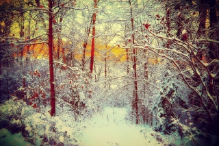 Winter Siberian Forest Background for Android, iPhone and iPad