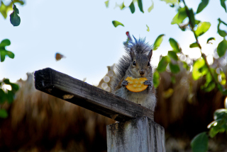 Squirrel Eating Cookie - Obrázkek zdarma pro Widescreen Desktop PC 1600x900