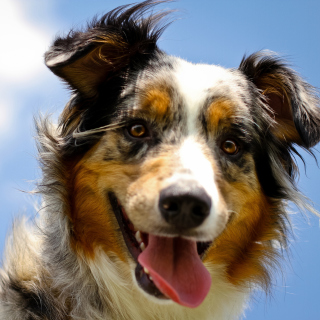 Dog is Best Friend - Obrázkek zdarma pro 1024x1024