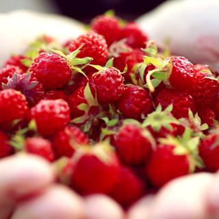 Macro HD Woodland Strawberry - Obrázkek zdarma pro 208x208