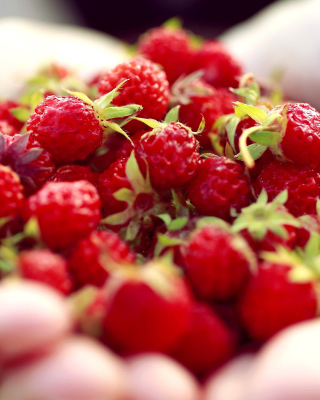 Macro HD Woodland Strawberry - Obrázkek zdarma pro 640x960