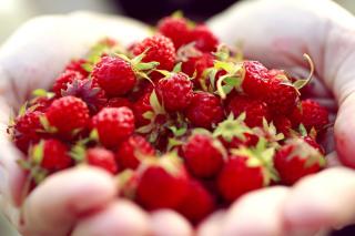 Macro HD Woodland Strawberry - Obrázkek zdarma pro 320x240