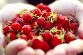 Macro HD Woodland Strawberry - Obrázkek zdarma pro Android 1920x1408