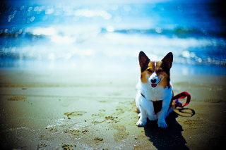 Free Happy Dog At Beach Picture for Android, iPhone and iPad