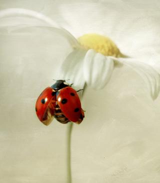 Ladybug On Daisy - Obrázkek zdarma pro Nokia C1-02