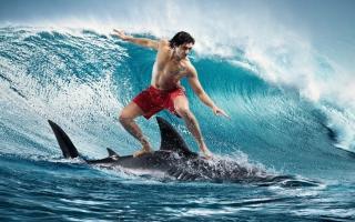 Shark Surfing - Obrázkek zdarma pro Fullscreen Desktop 1024x768