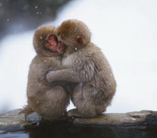 Monkey Love - Obrázkek zdarma pro iPad mini 2