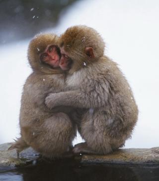 Monkey Love - Obrázkek zdarma pro iPhone 5S