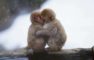 Monkey Love Background for Android, iPhone and iPad