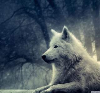 White Wolf Painting - Obrázkek zdarma pro iPad