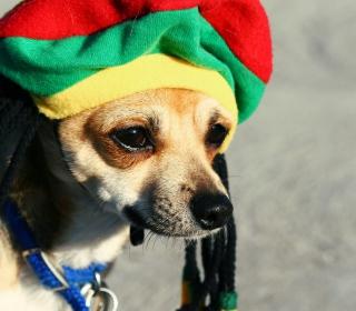 Rasta Dog - Obrázkek zdarma pro 1024x1024