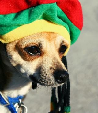 Rasta Dog - Obrázkek zdarma pro Nokia 206 Asha
