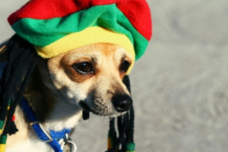 Rasta Dog - Obrázkek zdarma pro 320x240