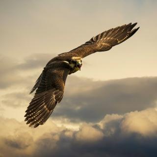 Falcon - Obrázkek zdarma pro 128x128