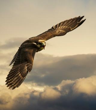 Falcon - Obrázkek zdarma pro 480x854