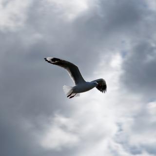 Seagull In Sky - Obrázkek zdarma pro 128x128