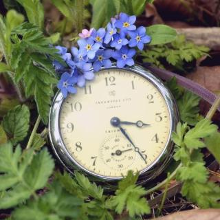 Vintage Watch And Little Blue Flowers - Obrázkek zdarma pro 128x128