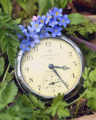 Vintage Watch And Little Blue Flowers - Obrázkek zdarma pro iPhone 6 Plus