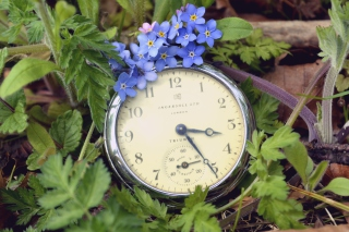 Vintage Watch And Little Blue Flowers - Obrázkek zdarma pro Desktop Netbook 1024x600