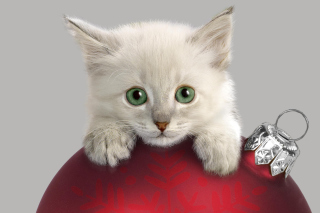 Free Christmas Kitten Picture for Android, iPhone and iPad