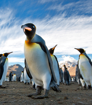 Curious Penguin - Obrázkek zdarma pro Nokia Asha 305