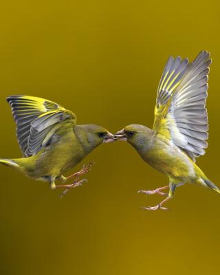 Birds Kissing - Obrázkek zdarma pro 768x1280