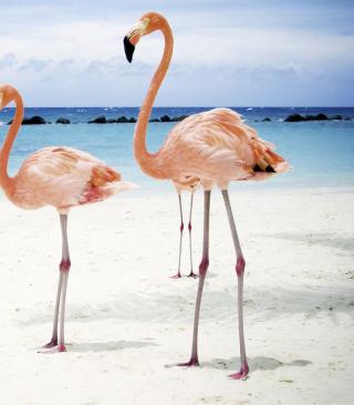 Pink Flamingo - Obrázkek zdarma pro Nokia C2-05