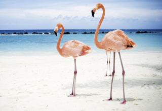 Pink Flamingo - Obrázkek zdarma pro LG P970 Optimus