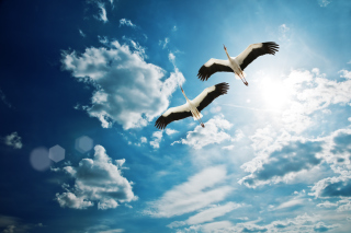 Beautiful Storks In Blue Sky Picture for Android, iPhone and iPad