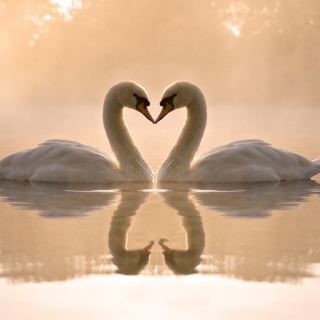 Two Swans - Obrázkek zdarma pro iPad mini